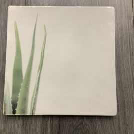 ASA- vierkanten borden set- aloe vera- fine bone china